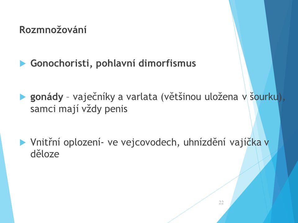Rozmnožování  Gonochoristi, pohlavní dimorfismus  gonády – vaječníky a varlata (většinou uložena v šourku), samci mají vždy penis  Vnitřní oplození