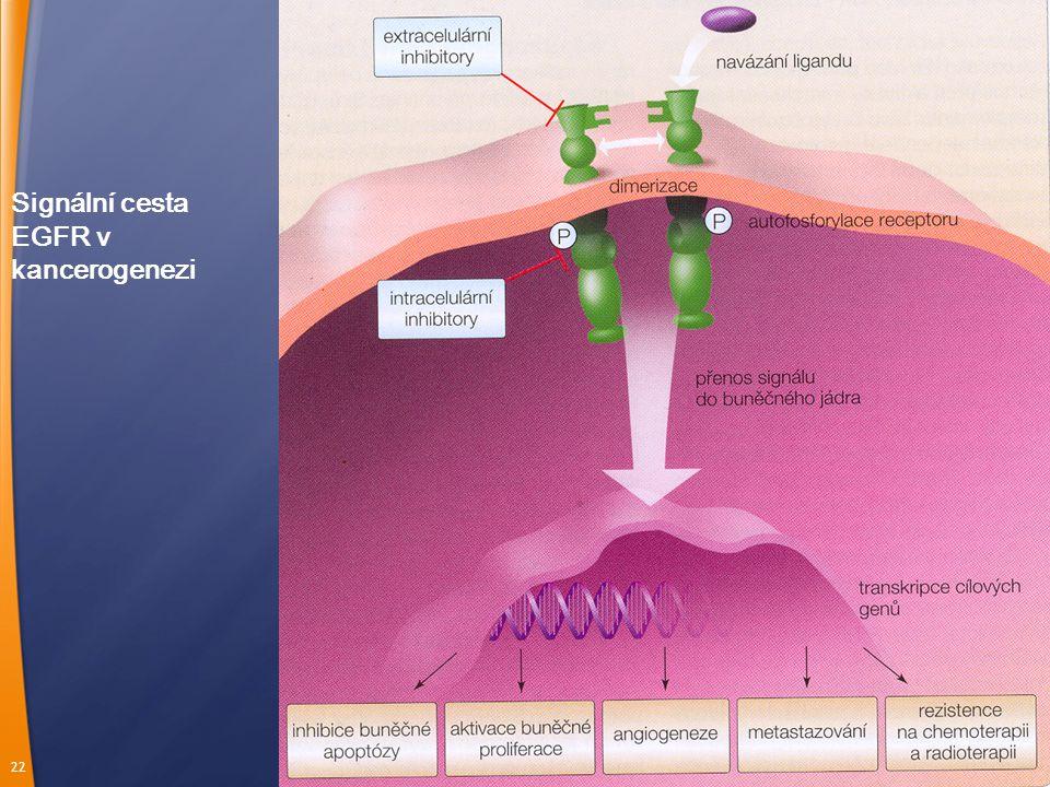 22 Signální cesta EGFR v kancerogenezi