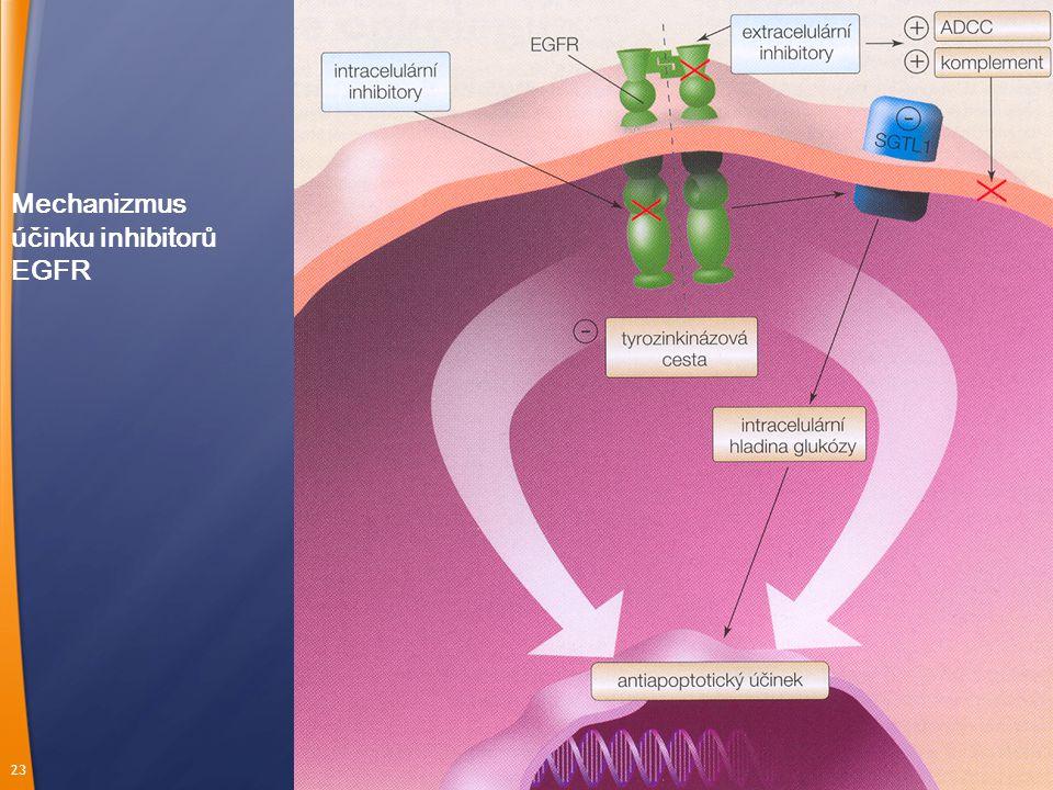 23 Mechanizmus účinku inhibitorů EGFR
