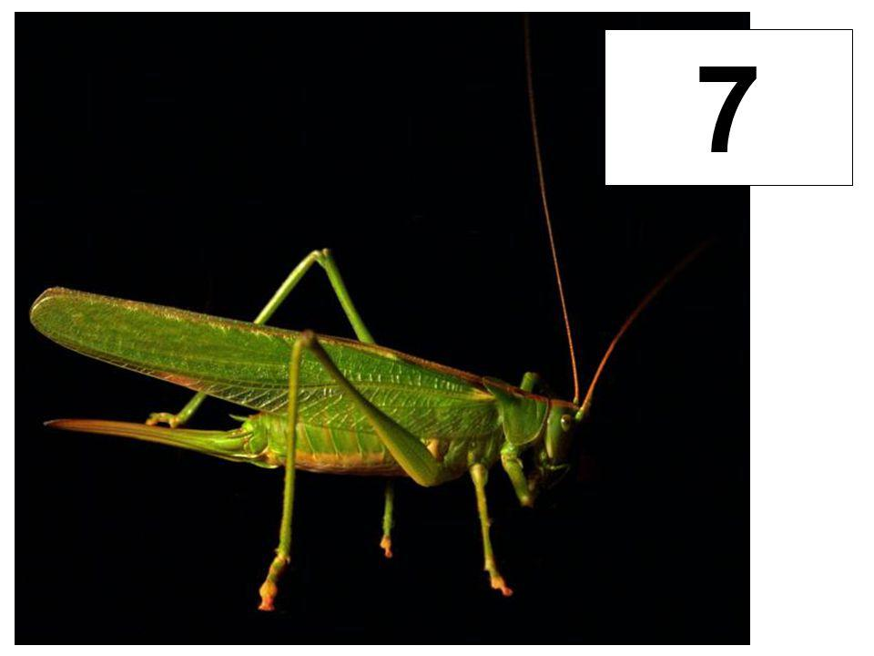 Kobylky 7