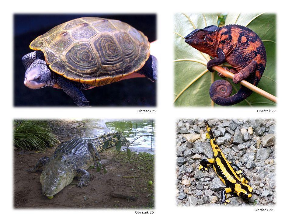 Želva Krokodýl Chameleon mlok Obrázek 25 Obrázek 26 Obrázek 27 Obrázek 28