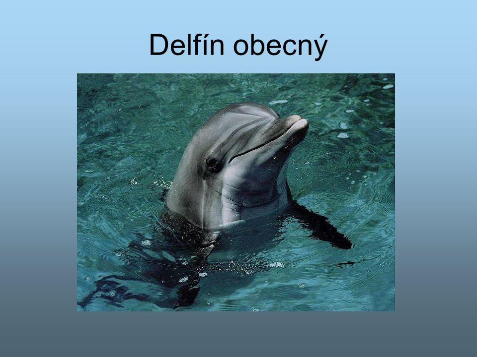 Delfín obecný