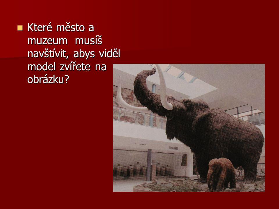 Které město a muzeum musíš navštívit, abys viděl model zvířete na obrázku? Které město a muzeum musíš navštívit, abys viděl model zvířete na obrázku?