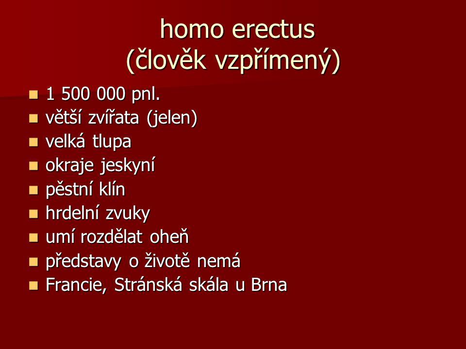 homo erectus (člověk vzpřímený) homo erectus (člověk vzpřímený) 1 500 000 pnl. 1 500 000 pnl. větší zvířata (jelen) větší zvířata (jelen) velká tlupa