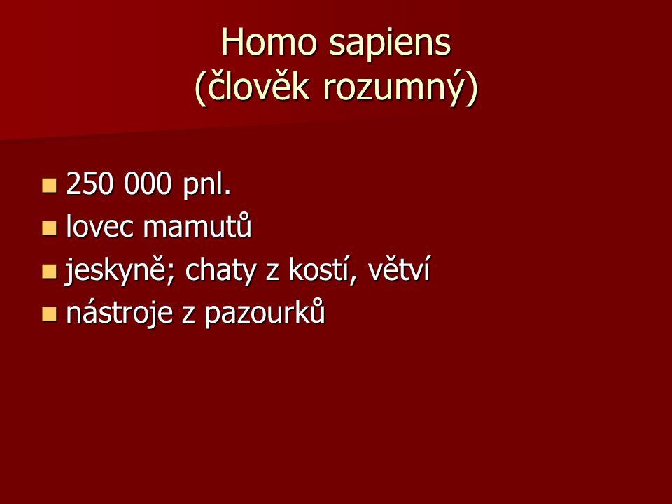 Homo sapiens (člověk rozumný) 250 000 pnl. 250 000 pnl. lovec mamutů lovec mamutů jeskyně; chaty z kostí, větví jeskyně; chaty z kostí, větví nástroje