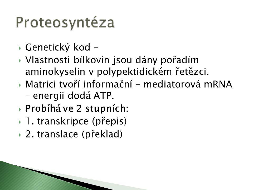  Genetický kod –  Vlastnosti bílkovin jsou dány pořadím aminokyselin v polypektidickém řetězci.