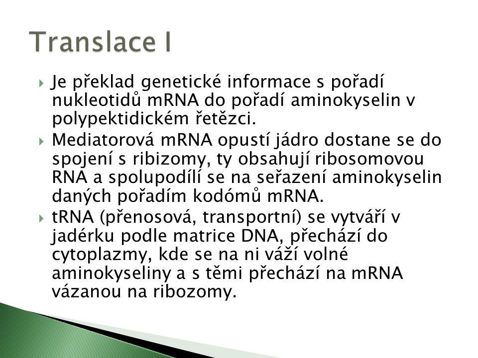  Je překlad genetické informace s pořadí nukleotidů mRNA do pořadí aminokyselin v polypektidickém řetězci.