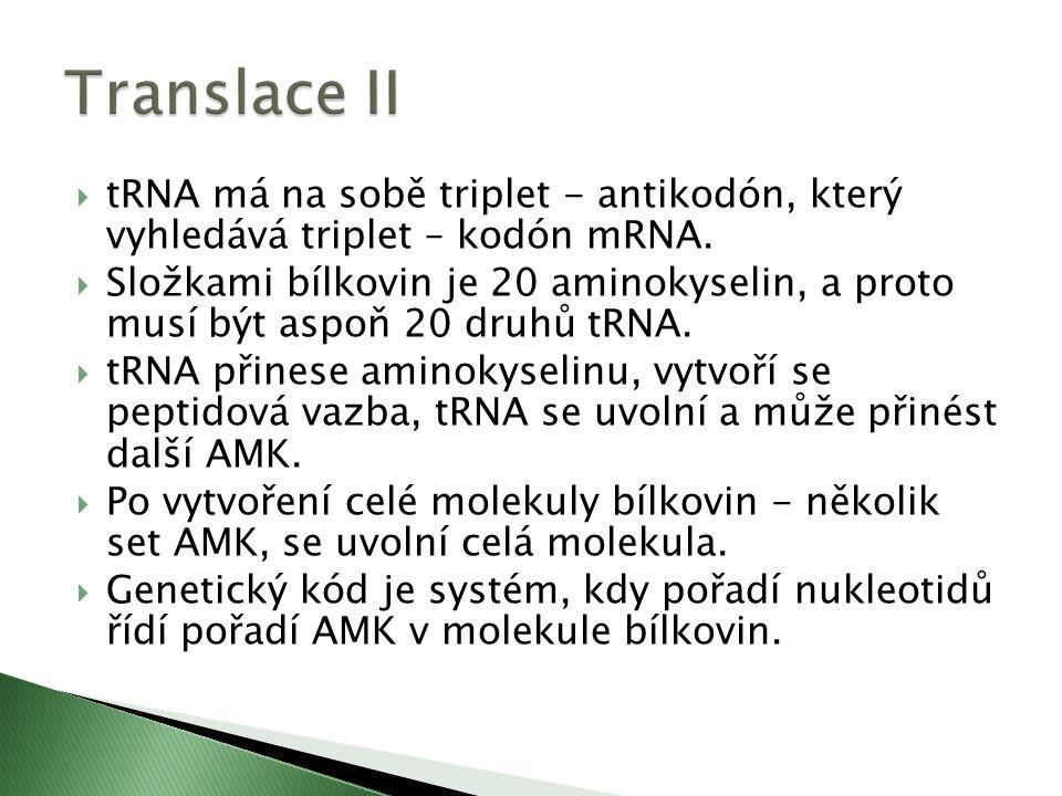  tRNA má na sobě triplet - antikodón, který vyhledává triplet – kodón mRNA.