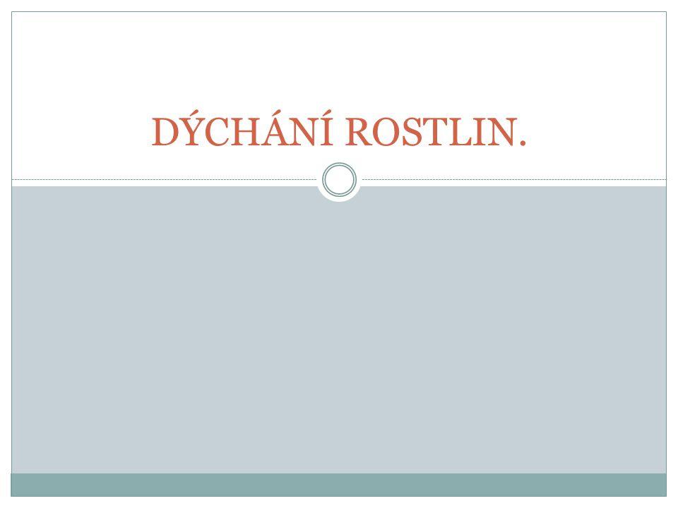DÝCHÁNÍ ROSTLIN.
