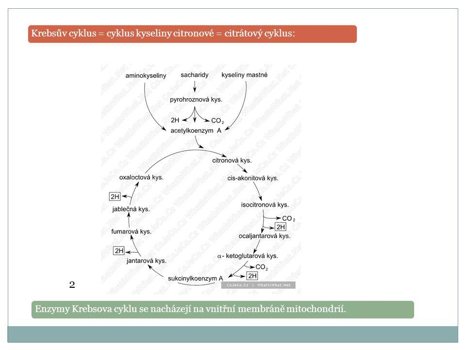 Krebsův cyklus = cyklus kyseliny citronové = citrátový cyklus:Enzymy Krebsova cyklu se nacházejí na vnitřní membráně mitochondrií.