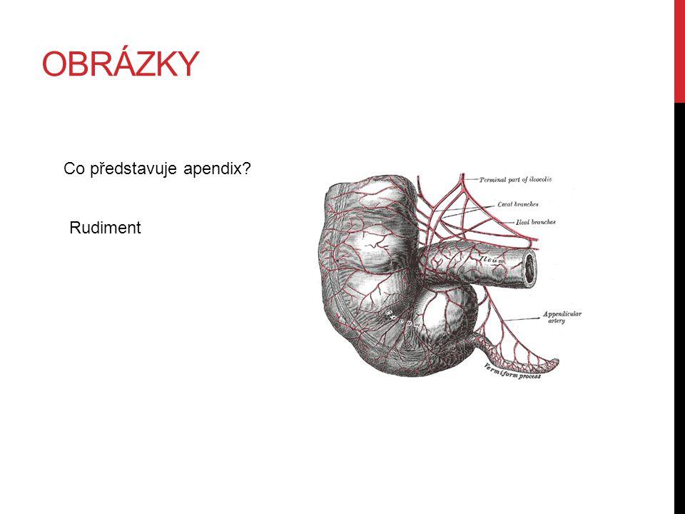 OBRÁZKY Co představuje apendix? Rudiment