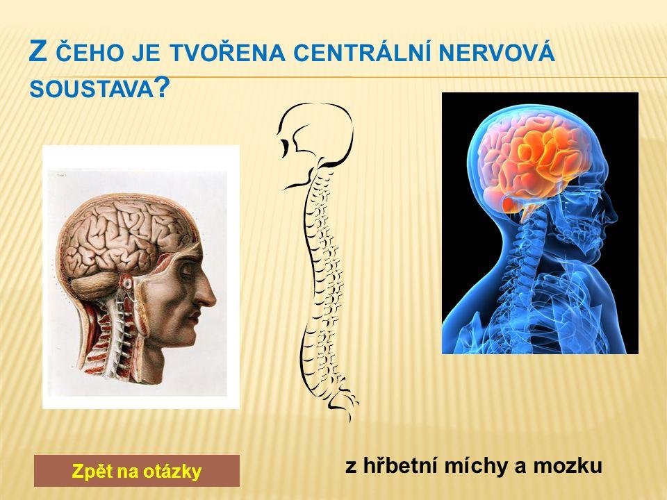 Zpět na otázky neuron – jádro, tělo, dendrity, neurit, myelinová pochva