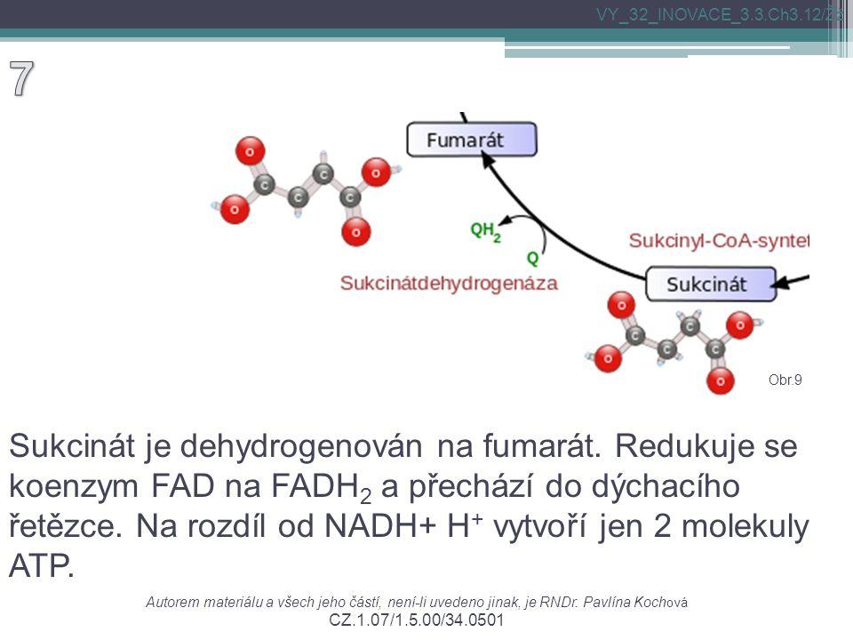Sukcinát je dehydrogenován na fumarát. Redukuje se koenzym FAD na FADH 2 a přechází do dýchacího řetězce. Na rozdíl od NADH+ H + vytvoří jen 2 molekul