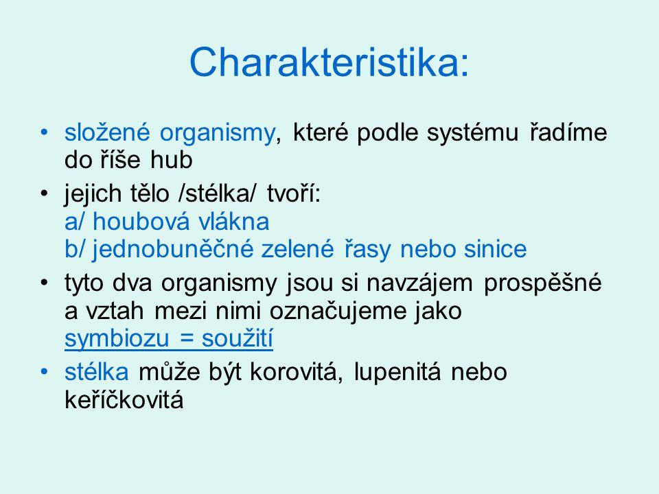 Charakteristika: složené organismy, které podle systému řadíme do říše hub jejich tělo /stélka/ tvoří: a/ houbová vlákna b/ jednobuněčné zelené řasy n