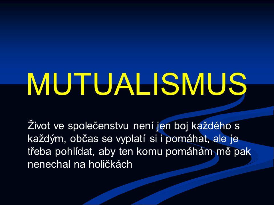 Terminologické nejasnosti Mutualismus – jednoznačně vztah + +, bez ohledu na to, je-li vztah obligátní pro partnery, a bez ohledu na to, jak je těsný Mutualismus – jednoznačně vztah + +, bez ohledu na to, je-li vztah obligátní pro partnery, a bez ohledu na to, jak je těsný Symbiosa – původně: těsné soužití dvou organismů (bez ohledu na to, zda je pro oba výhodný); později posum významu (těsné soužití, výhodné pro oba [někdy protokooperace a symbiosa jako dva typy ++ vztahů]) – TBH se snaží vrátit původní význam Symbiosa – původně: těsné soužití dvou organismů (bez ohledu na to, zda je pro oba výhodný); později posum významu (těsné soužití, výhodné pro oba [někdy protokooperace a symbiosa jako dva typy ++ vztahů]) – TBH se snaží vrátit původní význam