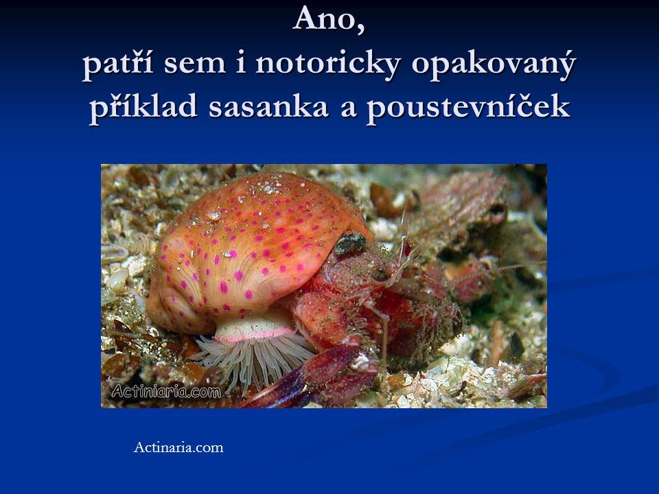 Ano, patří sem i notoricky opakovaný příklad sasanka a poustevníček Actinaria.com