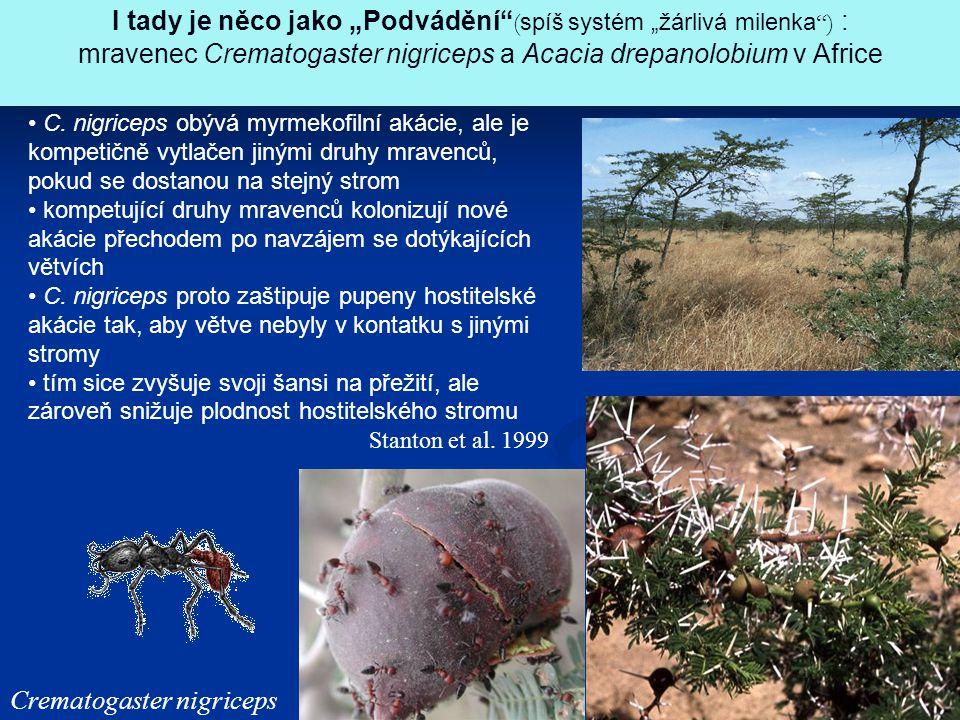 """Crematogaster nigriceps I tady je něco jako """"Podvádění"""" ( spíš systém """"žárlivá milenka """") : mravenec Crematogaster nigriceps a Acacia drepanolobium v"""