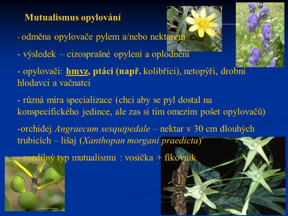 Mutualismus opylování - odměna opylovače pylem a/nebo nektarem - výsledek – cizosprašné opylení a oplodnění - opylovači: hmyz, ptáci (např. kolibříci)