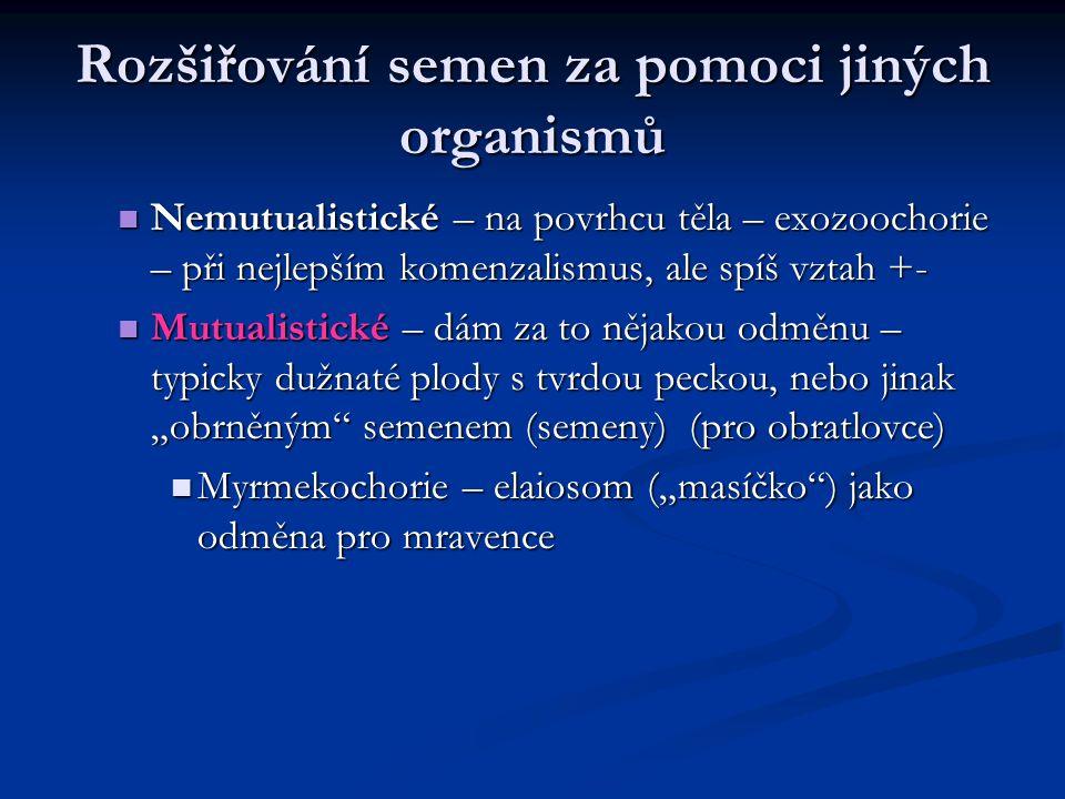 Rozšiřování semen za pomoci jiných organismů Nemutualistické – na povrhcu těla – exozoochorie – při nejlepším komenzalismus, ale spíš vztah +- Nemutua