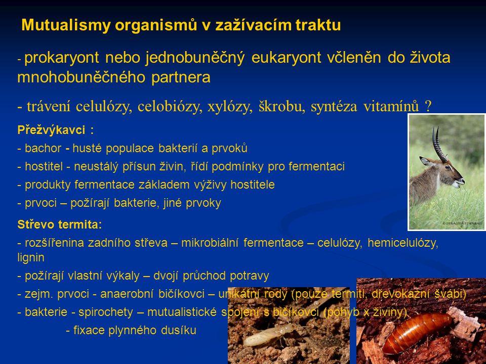 Mutualismy organismů v zažívacím traktu - prokaryont nebo jednobuněčný eukaryont včleněn do života mnohobuněčného partnera - trávení celulózy, celobió