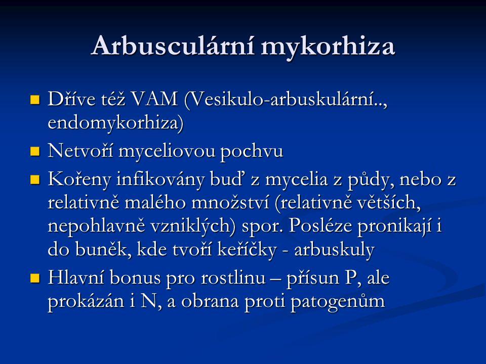 Arbusculární mykorhiza Dříve též VAM (Vesikulo-arbuskulární.., endomykorhiza) Dříve též VAM (Vesikulo-arbuskulární.., endomykorhiza) Netvoří myceliovo