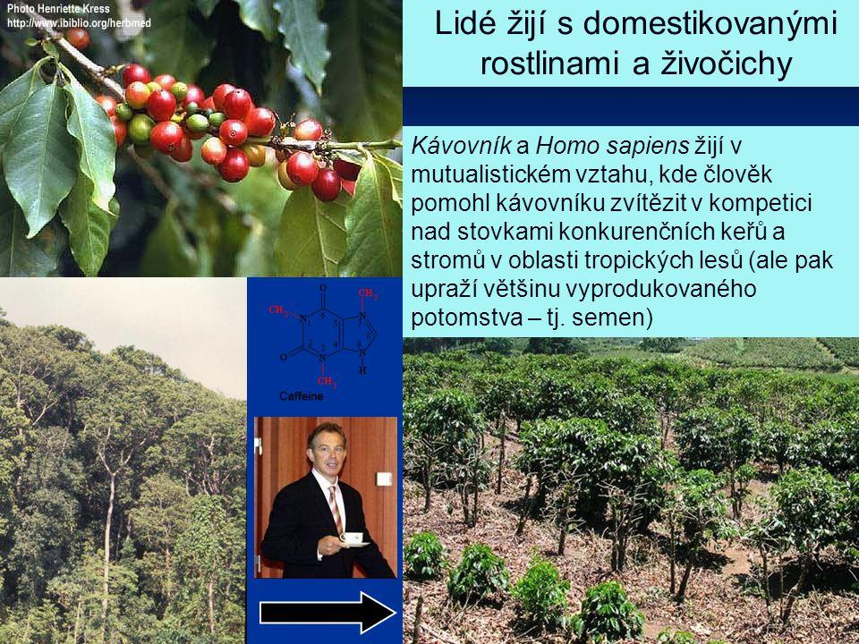 Mutualismy týkající se kulturních plodin a dobytka - podobné příklady i v přírodě Vztah druhu Homo sapiens k potravním rostlinám a dobytku Chov housenek modráska (Lycaena avion) mravenci - ale tady je to spíš parazitismus Pěstování hub brouky, mravenci, termity Chov mšic mravenci