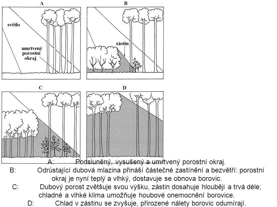 A: Podsluněný, vysušený a umrtvený porostní okraj. B: Odrůstající dubová mlazina přináší částečné zastínění a bezvětří: porostní okraj je nyní teplý a