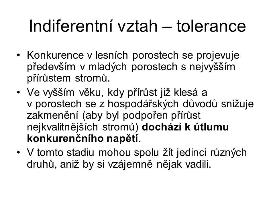 Indiferentní vztah – tolerance Konkurence v lesních porostech se projevuje především v mladých porostech s nejvyšším přírůstem stromů. Ve vyšším věku,