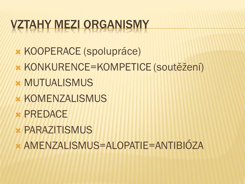  KOOPERACE (spolupráce)  KONKURENCE=KOMPETICE (soutěžení)  MUTUALISMUS  KOMENZALISMUS  PREDACE  PARAZITISMUS  AMENZALISMUS=ALOPATIE=ANTIBIÓZA