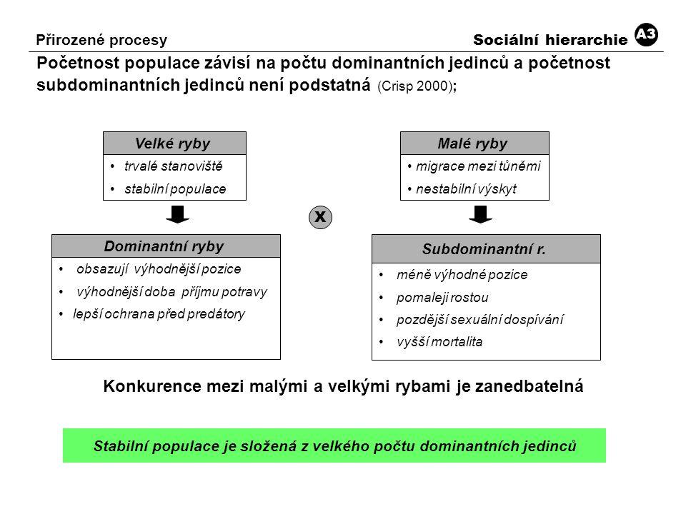 Početnost populace závisí na počtu dominantních jedinců a početnost subdominantních jedinců není podstatná (Crisp 2000) ; Konkurence mezi malými a vel