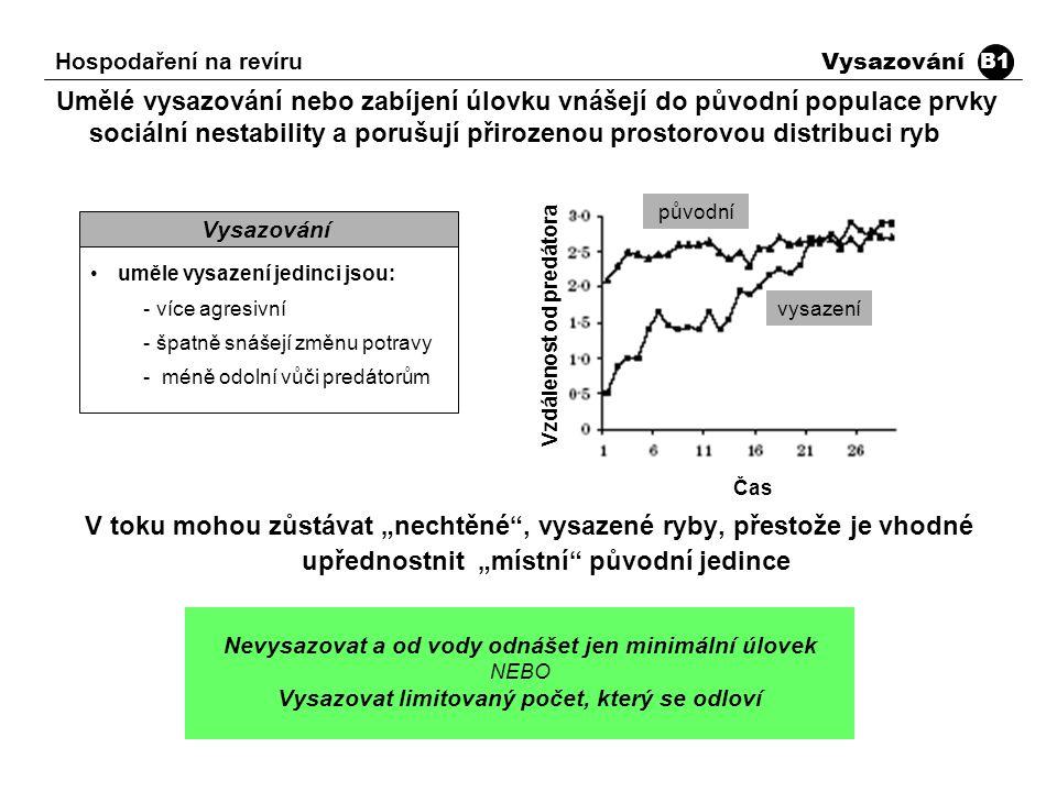 """Umělé vysazování nebo zabíjení úlovku vnášejí do původní populace prvky sociální nestability a porušují přirozenou prostorovou distribuci ryb V toku mohou zůstávat """"nechtěné , vysazené ryby, přestože je vhodné upřednostnit """"místní původní jedince uměle vysazení jedinci jsou: -více agresivní -špatně snášejí změnu potravy - méně odolní vůči predátorům Vysazování Hospodaření na revíru Vysazování B1 Nevysazovat a od vody odnášet jen minimální úlovek NEBO Vysazovat limitovaný počet, který se odloví Vzdálenost od predátora Čas původní vysazení"""