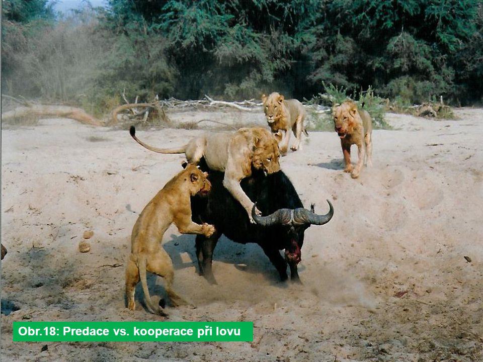 Obr.18: Predace vs. kooperace při lovu