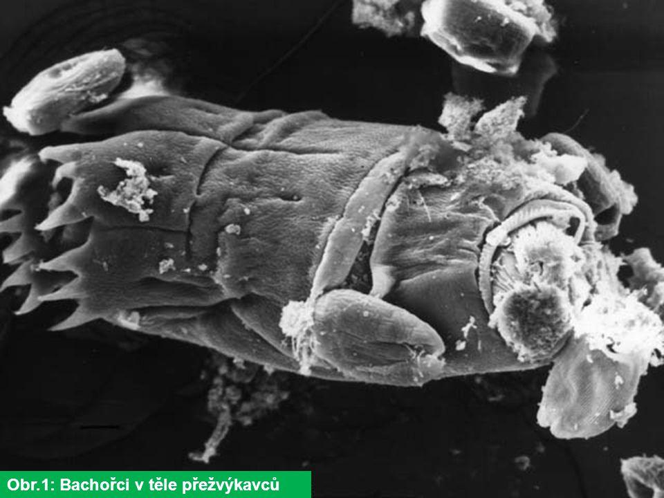 Obr.2: Terčovník zední (Xantoria parietina)