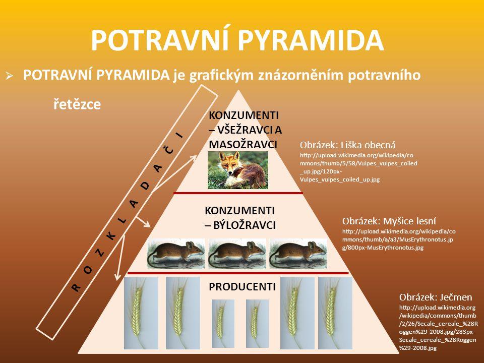  POTRAVNÍ PYRAMIDA je grafickým znázorněním potravního řetězce POTRAVNÍ PYRAMIDA PRODUCENTI KONZUMENTI – VŠEŽRAVCI A MASOŽRAVCI KONZUMENTI – BÝLOŽRAV