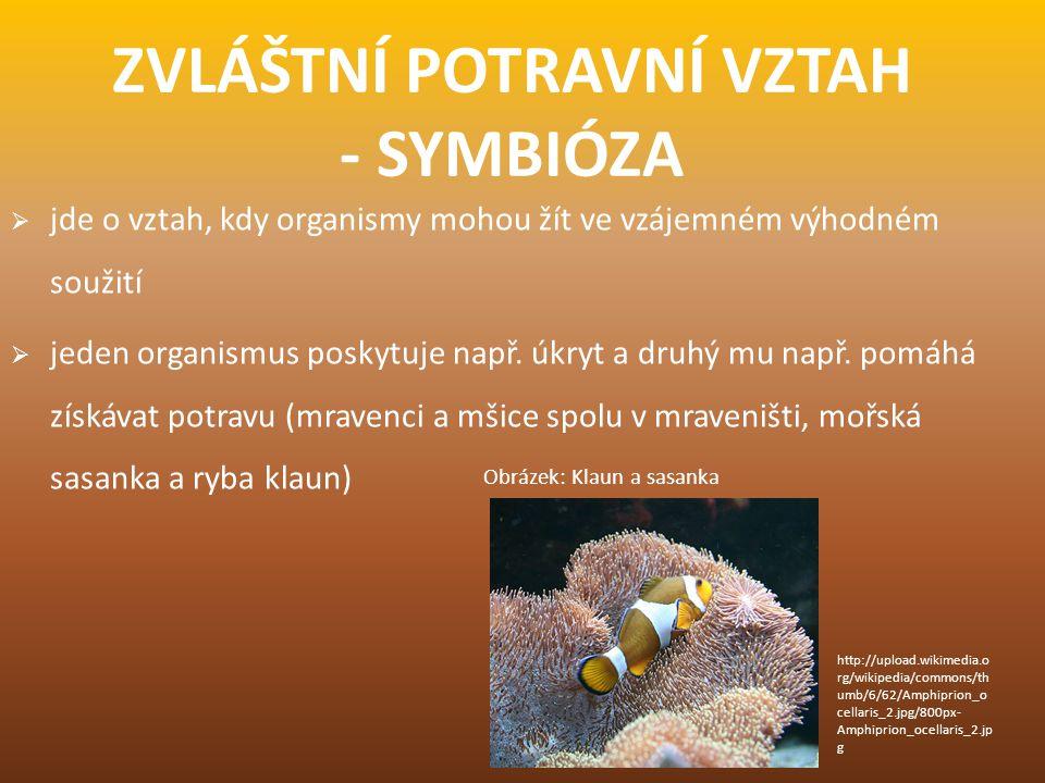 ZVLÁŠTNÍ POTRAVNÍ VZTAH - SYMBIÓZA  jde o vztah, kdy organismy mohou žít ve vzájemném výhodném soužití  jeden organismus poskytuje např. úkryt a dru