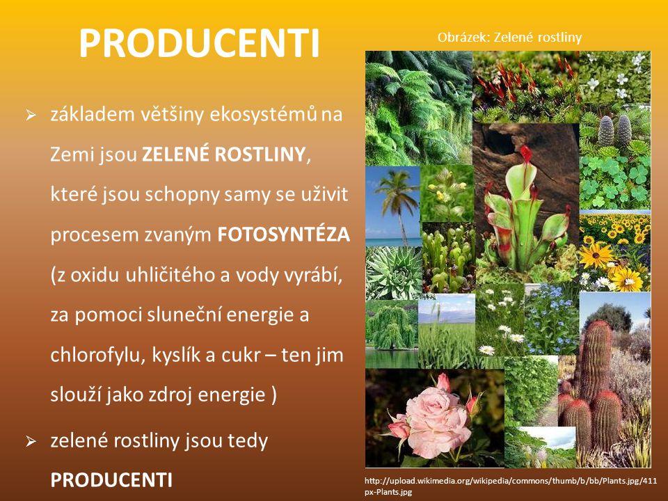 KONZUMENTI  jsou VŠICHNI ŽIVOČICHOVÉ, kteří si neumí vyrobit potřebné látky k životu, a proto je musí přijímat v potravě = KONZUMOVAT  jsou to tedy KONZUMENTI  konzumenty dělíme podle toho, čím se živí na: BÝLOŽRAVCE - rostlinná potrava (např.