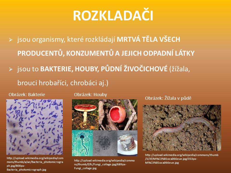 ROZKLADAČI  jsou organismy, které rozkládají MRTVÁ TĚLA VŠECH PRODUCENTŮ, KONZUMENTŮ A JEJICH ODPADNÍ LÁTKY  jsou to BAKTERIE, HOUBY, PŮDNÍ ŽIVOČICH