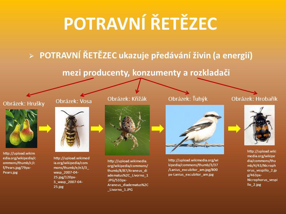 POTRAVNÍ ŘETĚZEC  POTRAVNÍ ŘETĚZEC ukazuje předávání živin (a energií) mezi producenty, konzumenty a rozkladači http://upload.wikim edia.org/wikipedi