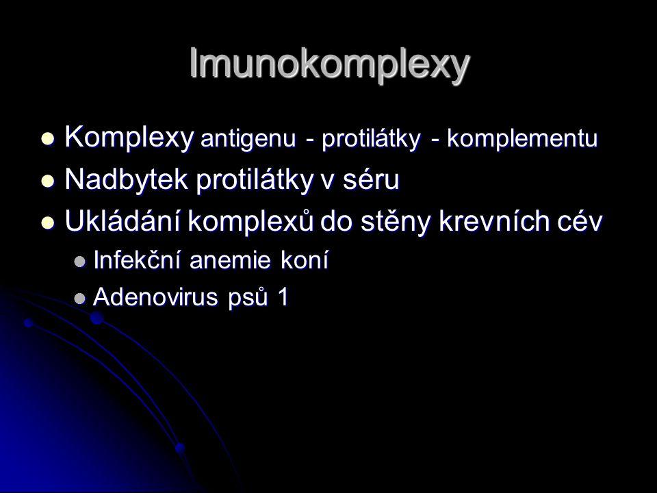 Imunokomplexy Komplexy antigenu - protilátky - komplementu Komplexy antigenu - protilátky - komplementu Nadbytek protilátky v séru Nadbytek protilátky v séru Ukládání komplexů do stěny krevních cév Ukládání komplexů do stěny krevních cév Infekční anemie koní Infekční anemie koní Adenovirus psů 1 Adenovirus psů 1