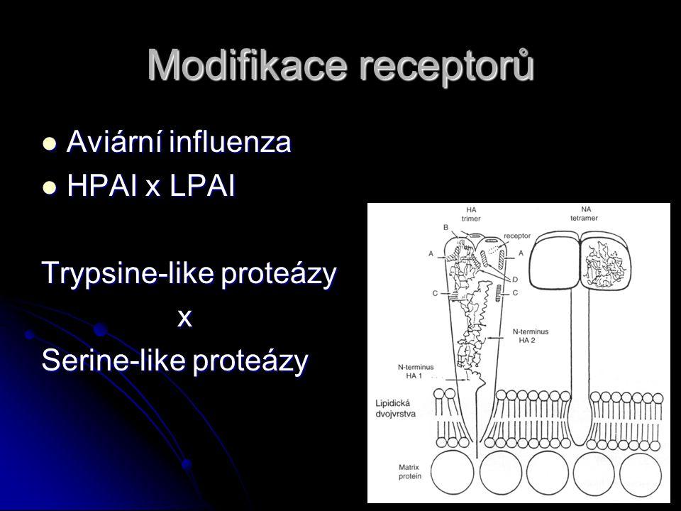 Modifikace receptorů Aviární influenza Aviární influenza HPAI x LPAI HPAI x LPAI Trypsine-like proteázy x Serine-like proteázy