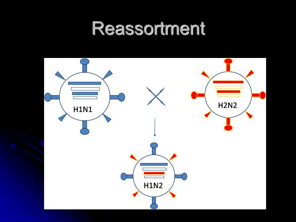 Infekce očí Spojivkový vak Spojivkový vak Psinka, herpesvirové infekce …… Psinka, herpesvirové infekce …… Replikace virů Replikace virů EHV-1, EHV-2 EHV-1, EHV-2 Imunokomplexy Imunokomplexy CAV-1, La piedad, EIA CAV-1, La piedad, EIA