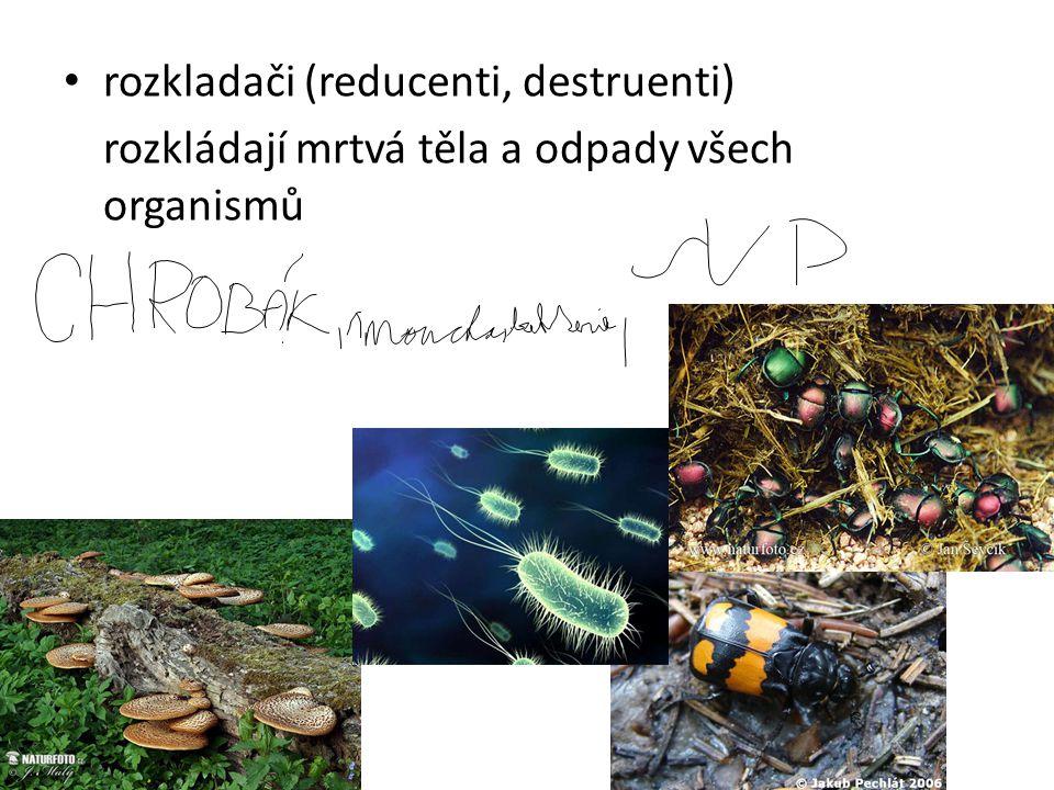 rozkladači (reducenti, destruenti) rozkládají mrtvá těla a odpady všech organismů