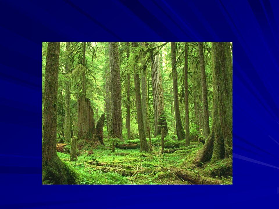 Pohled na vztah člověka a přírody Antropocentrismus – biocentrismus Panský postoj Správce přírody (Steward) Partner přírody Mystický vztah (Matka příroda)