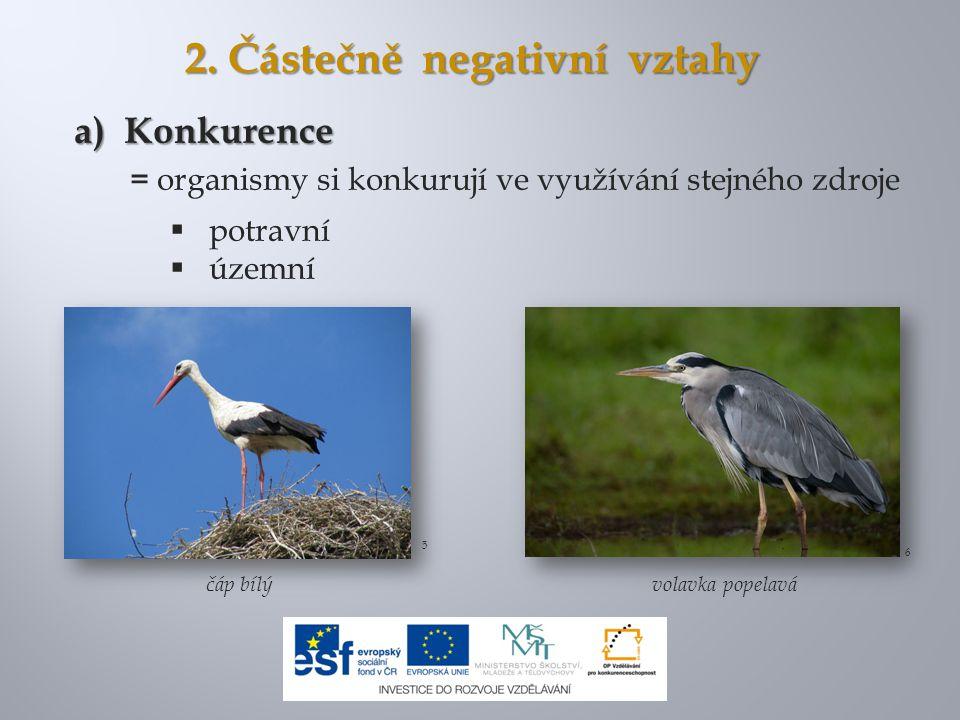 2. Částečně negativní vztahy a) Konkurence = organismy si konkurují ve využívání stejného zdroje  potravní  územní čáp bílý 6 5 volavka popelavá