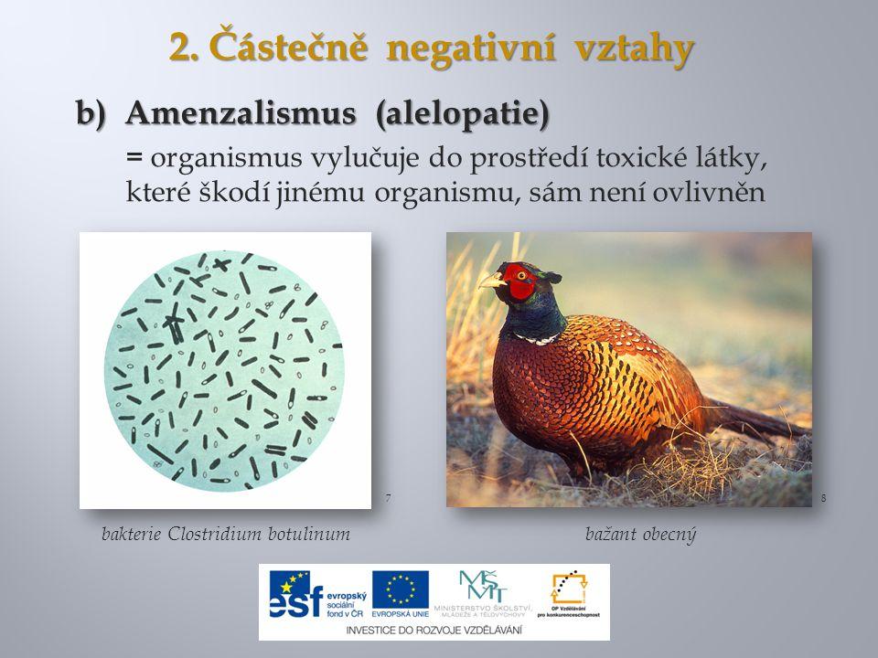 2. Částečně negativní vztahy b) Amenzalismus (alelopatie) = organismus vylučuje do prostředí toxické látky, které škodí jinému organismu, sám není ovl