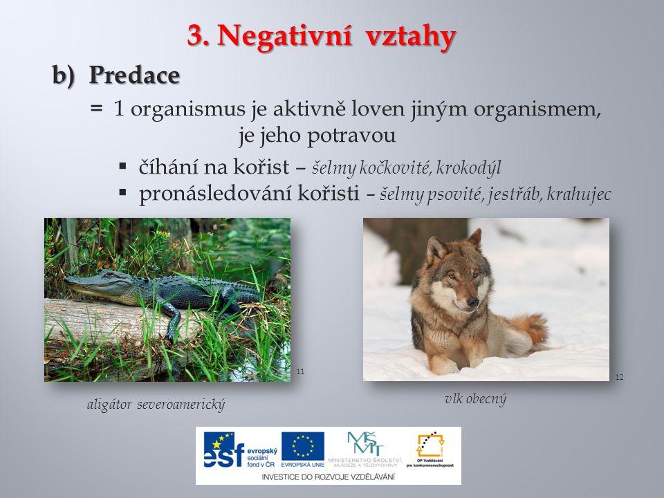 3. Negativní vztahy b) Predace = 1 organismus je aktivně loven jiným organismem, je jeho potravou 12 11  číhání na kořist – šelmy kočkovité, krokodýl