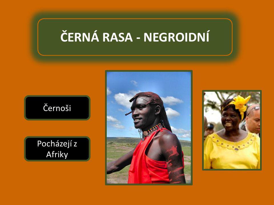 ČERNÁ RASA - NEGROIDNÍ Pocházejí z Afriky Černoši