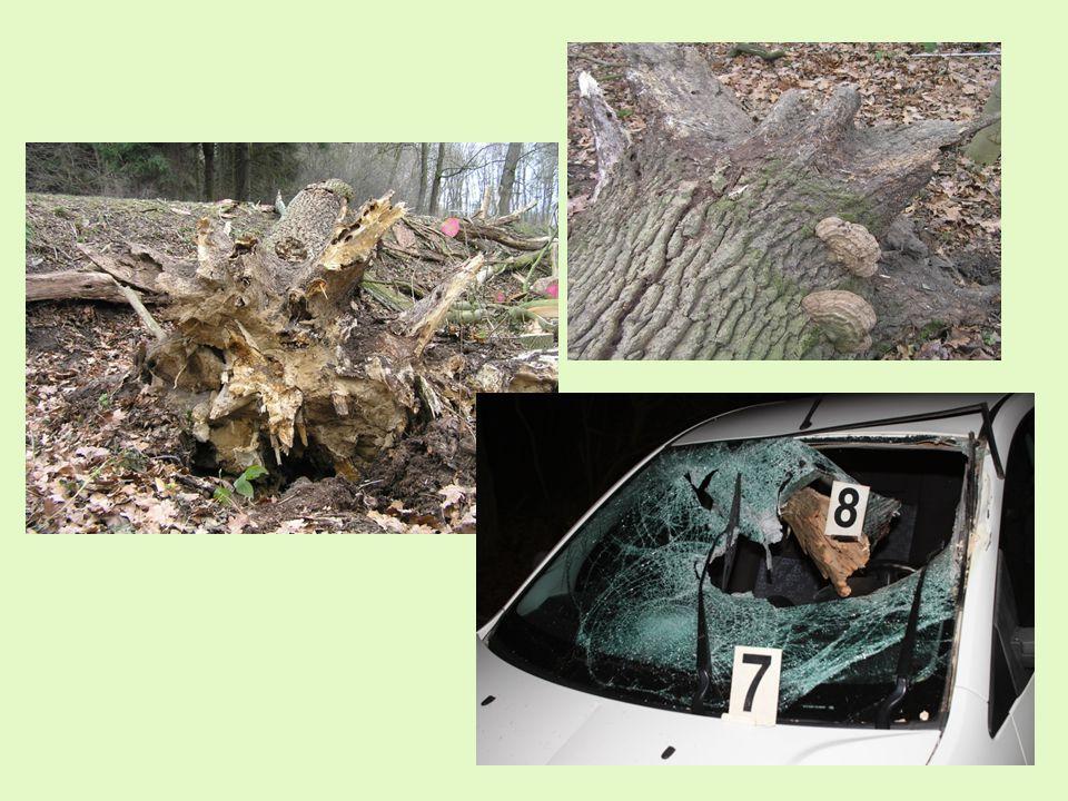 Hodnota cíle pádu - charakterizuje intenzitu pohybu osob a automobilové dopravy v potenciální dopadové vzdálenosti stromu, včetně průměrné (odhadované) hodnoty majetku (úhrnu objektů), který může být v případě selhání stromu nebo jeho části zasažen, - uvádí se formou odhadu převažující charakteristiky 1 1 - >35 osob za hodinu, dálnice, silnice I.
