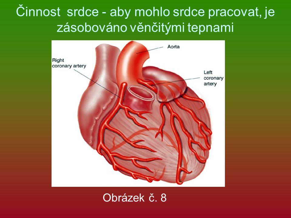 Činnost srdce - aby mohlo srdce pracovat, je zásobováno věnčitými tepnami Obrázek č. 8