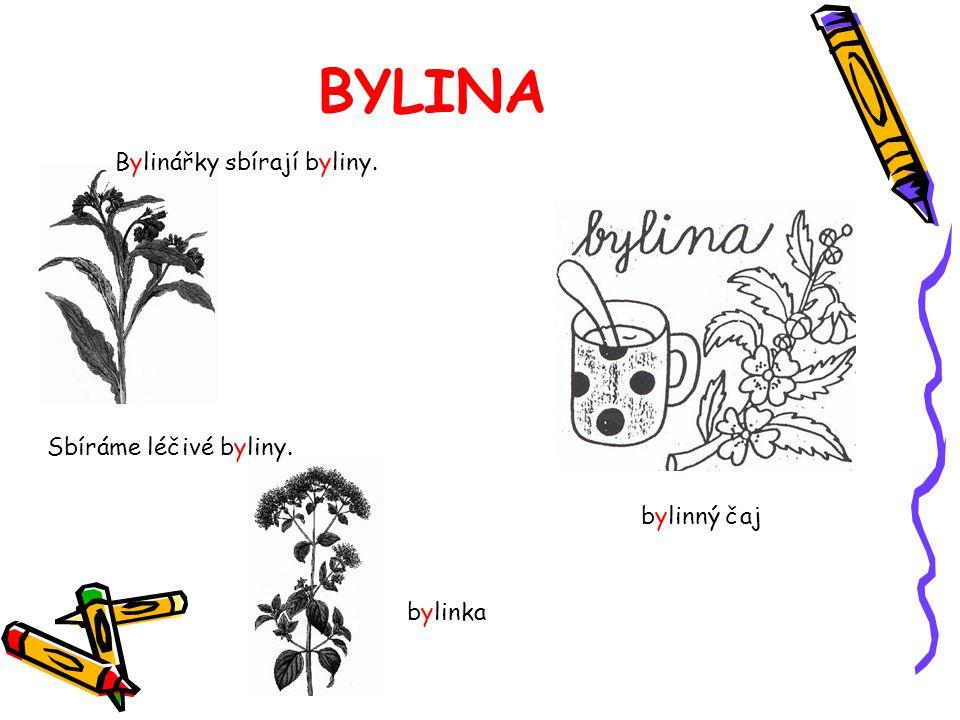 BYLINA bylinný čaj Bylinářky sbírají byliny. Sbíráme léčivé byliny. bylinka